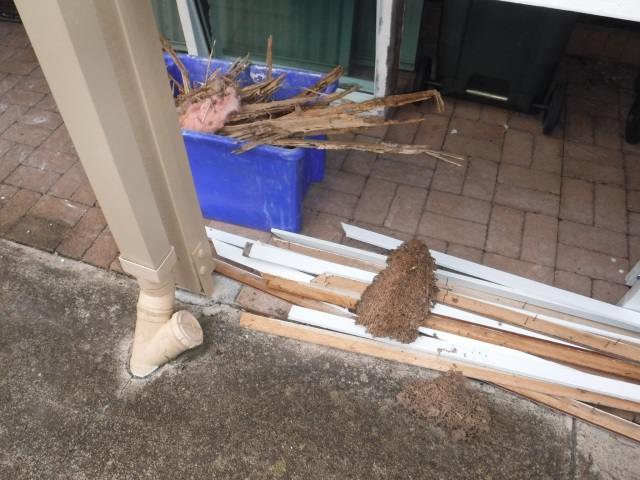 Laceys Creek Termite Risk