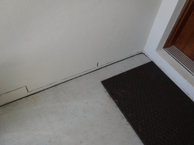 White Patch Termite Risk